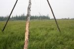 Steppe to Tundra