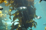 Kelp Transitions