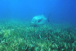 Seagrass transitions